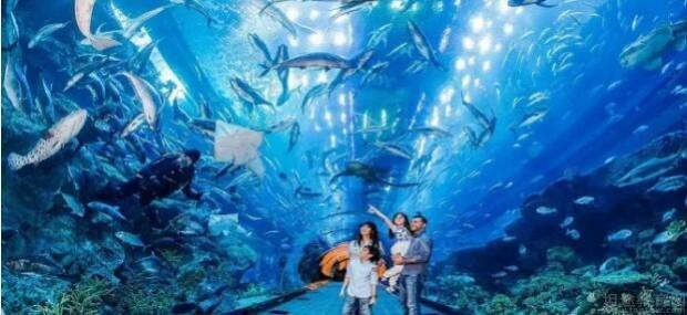 壁纸 海底 海底世界 海洋馆 水族馆 桌面 620_285