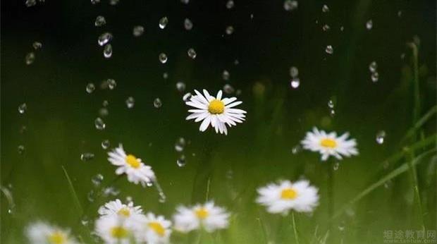 赫柏花艺在狂风暴雨中教你如何挑选花材